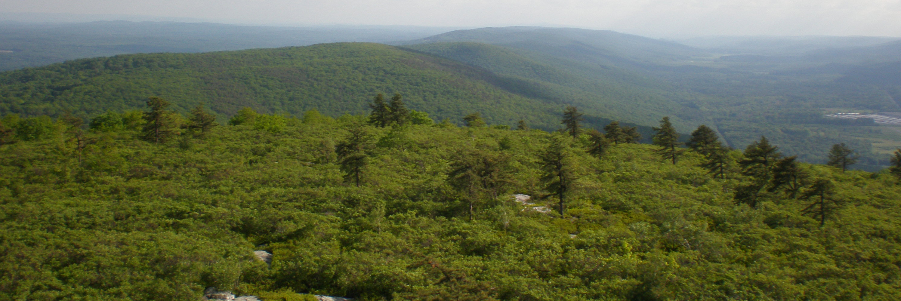 Looking south along the Shawangunk Ridge in summer.