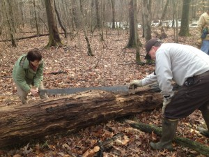 Volunteers with the Friends of Great Swamp use a crosscut saw to clear a downed tree.