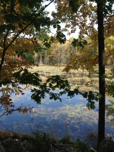 Pictured: Wetland in the Doris Duke Wildlife Sanctuary at Sterling Forest State Park