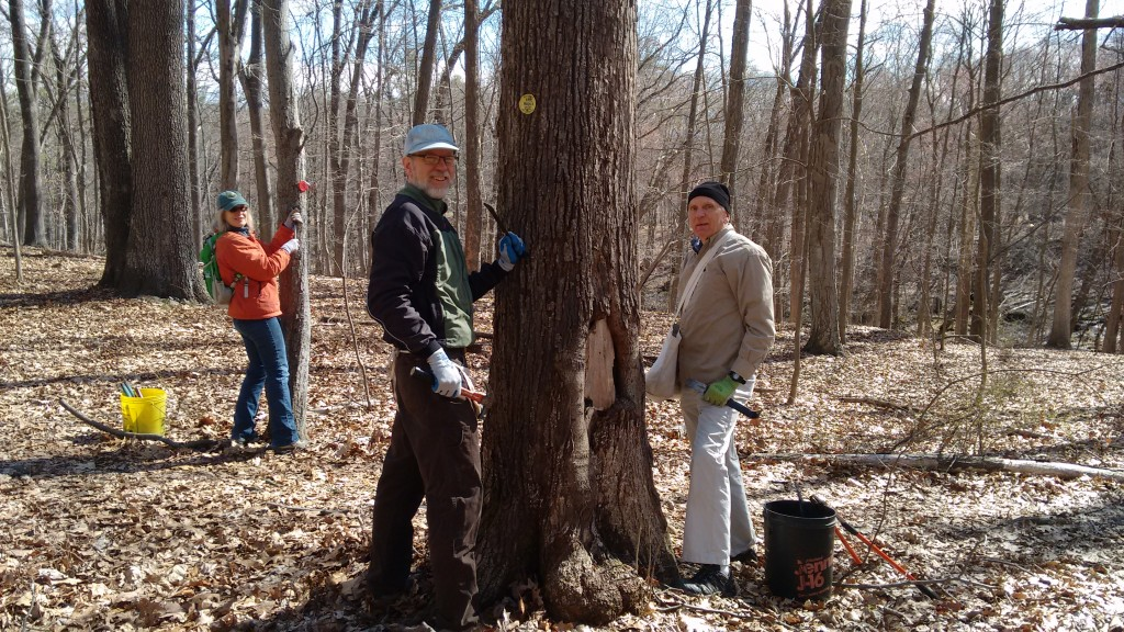 Volunteers of the New York-New Jersey Trail Conference are reblazing trails through Mills-Norrie State Park. (Photo credit: Georgette Weir)